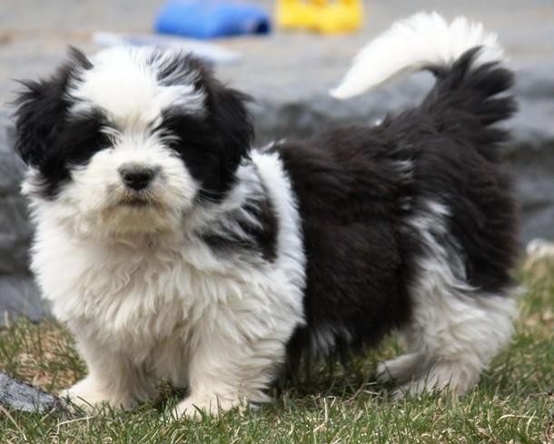 Free Small Dogs In Regina