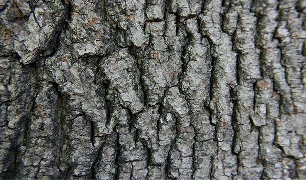 Vikingii colectau o ciuperca din scoarta copacilor pe care o imbibau in urina pentru cateva zile. Ei foloseau aceste ciuperci pentru a aprinde focul.
