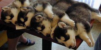 Animale care dorm