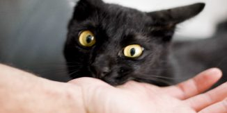 Pisici rele