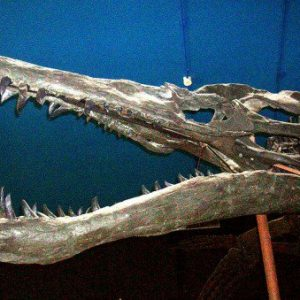 cei mai temuti predatori din lume Liopleurodon