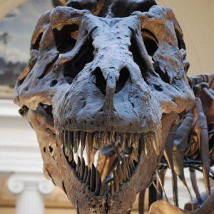 cei mai temuti predatori din lume Tiranozaurus rex