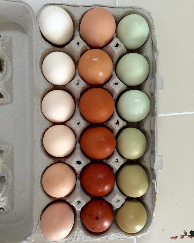 18 poze ale perfectiunii oua