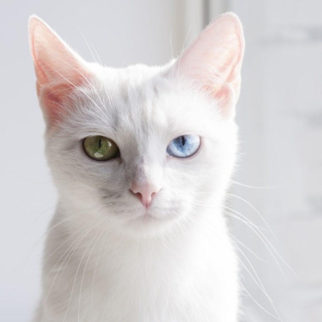 cea mai scumpa pisica din lume