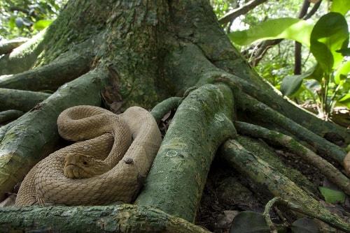 lha da Queimada Grande (Insula serpilor), Brazilia