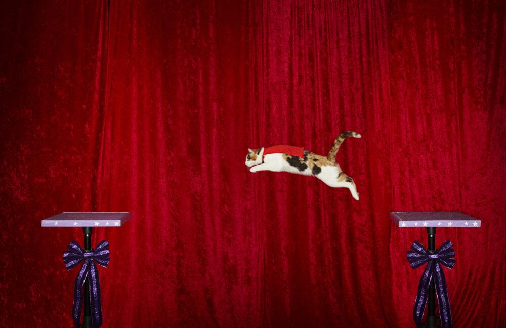 recordul mondial la cea mai mare saritura a unei pisici