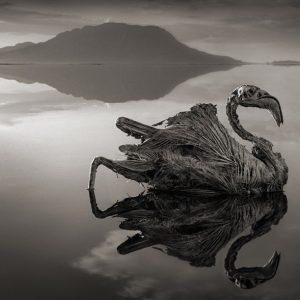 Lacul care transforma animalele in statui de piatra