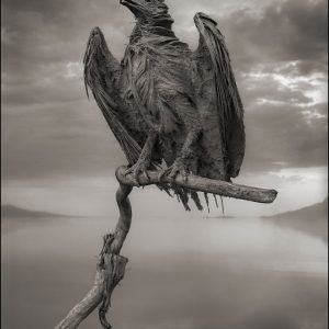 vultur calcificat