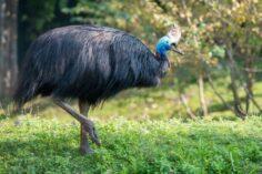 10 cele mai periculoase păsări din lume