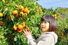 15 fructe japoneze pe care ar trebui să le gustați în timp ce vizitați