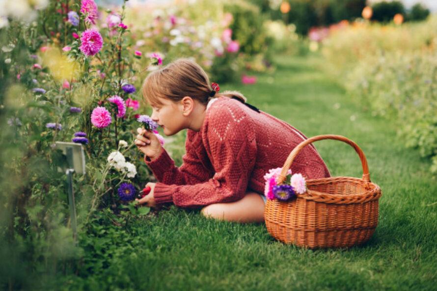 10 cele mai aromate flori pentru gradina ta