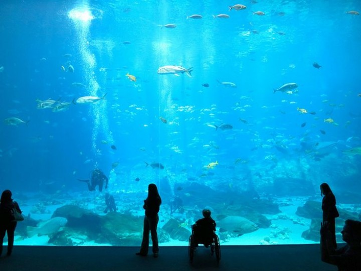 cel mai mare acvariu din lume