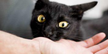 10 cele mai periculoase rase de pisici