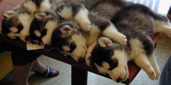 """25 de animale somnoroase care sigur iti vor """"incalzi"""" ziua"""