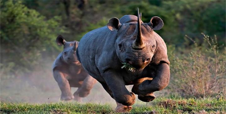 25 cele mai periculoase animale din lume