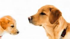 21 de imagini drăguțe cu câini înainte și după ce au crescut