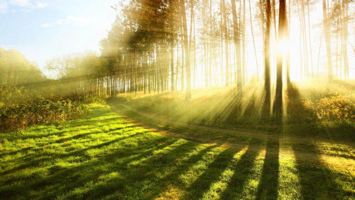 Ce s-ar intampla daca nu am intra niciodata in contact cu lumina solara?
