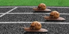 Care este cea mai rapidă vieţuitoare din lume?