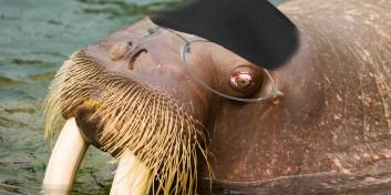 25 mituri populare despre animale pe care, probabil, le credeti