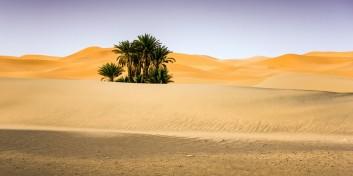 Cum apar oazele în deşert?