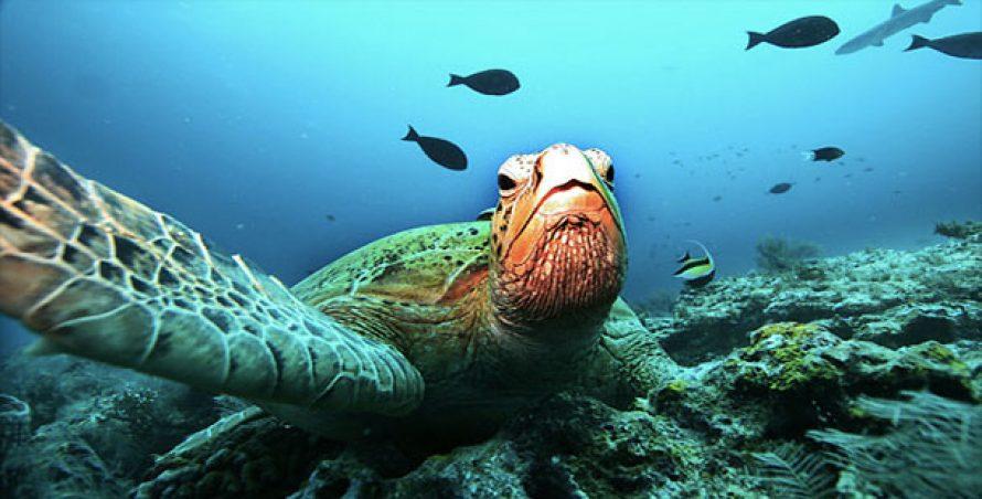 25 de lucruri surprinzătoare despre oceane