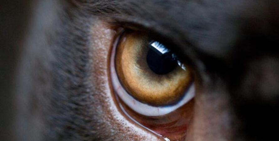 25 cele mai periculoase rase de câini