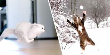 Imagini uimitoare care dovedesc că pisicile pot zbura