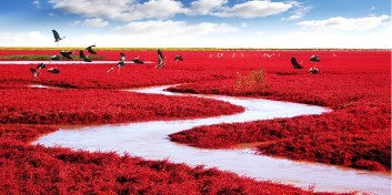 Plaja Roșie din China
