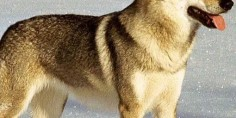 12 rase de câini interzise prin lume