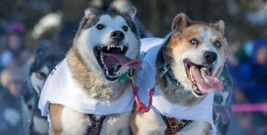 Cele mai căutate rase de câini pe Google