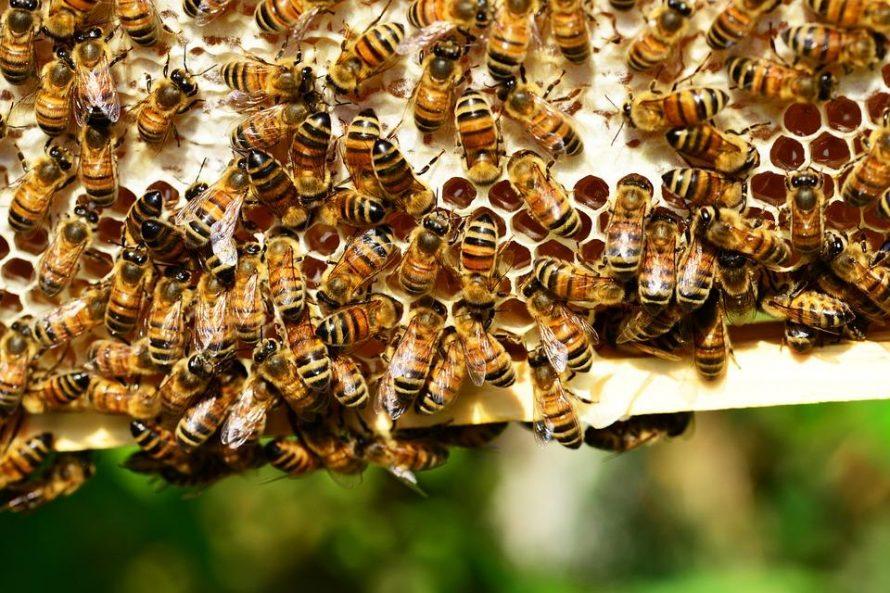Top 5 insecte cu cele mai mari colonii