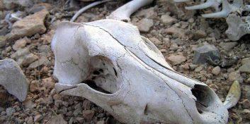 Valea Mortii din Rusia